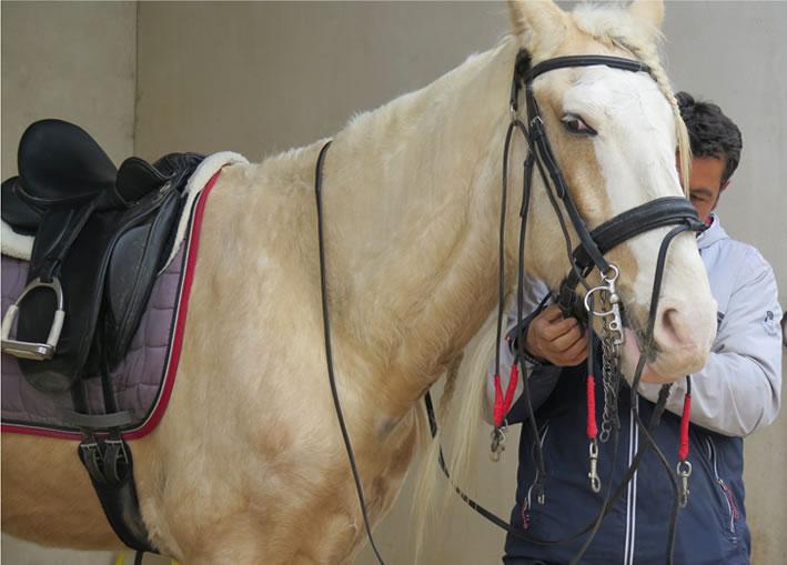 Trotes Clase de equitación