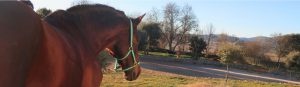 Pupilaje Sierra Norte Madrid venta de caballos doma entrenamiento