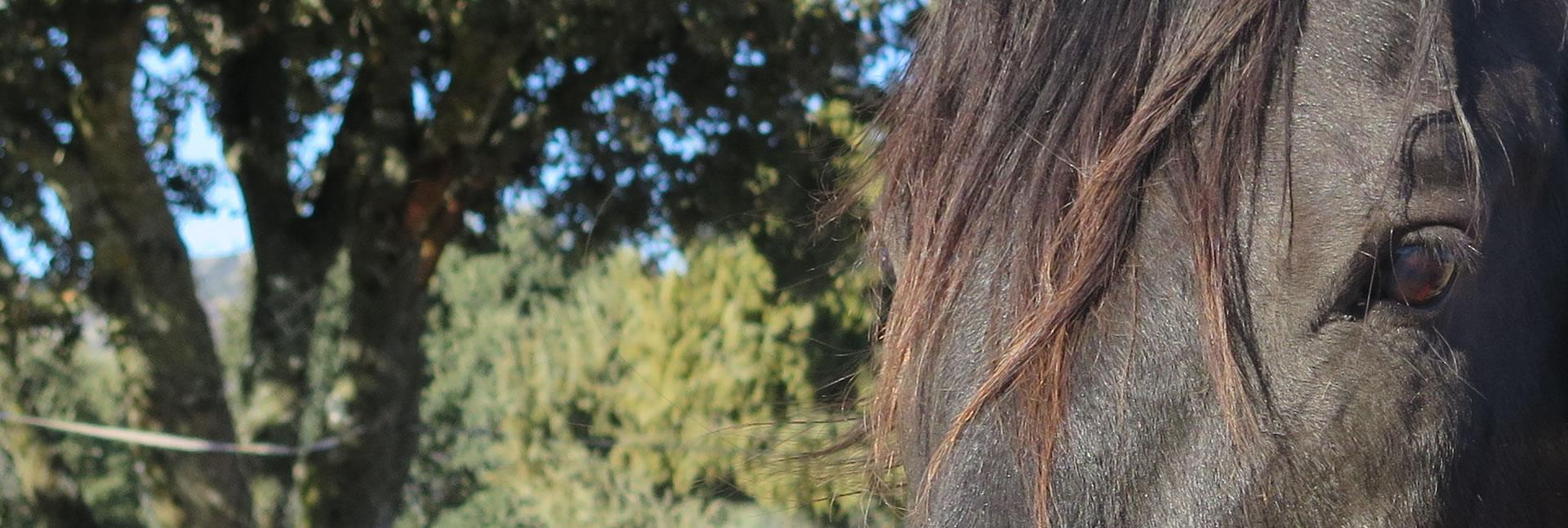 Cuidamos de tu caballo